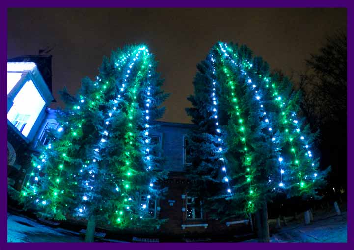 Подсветка ёлок светодиодным белтлайтом белого и зелёного цвета