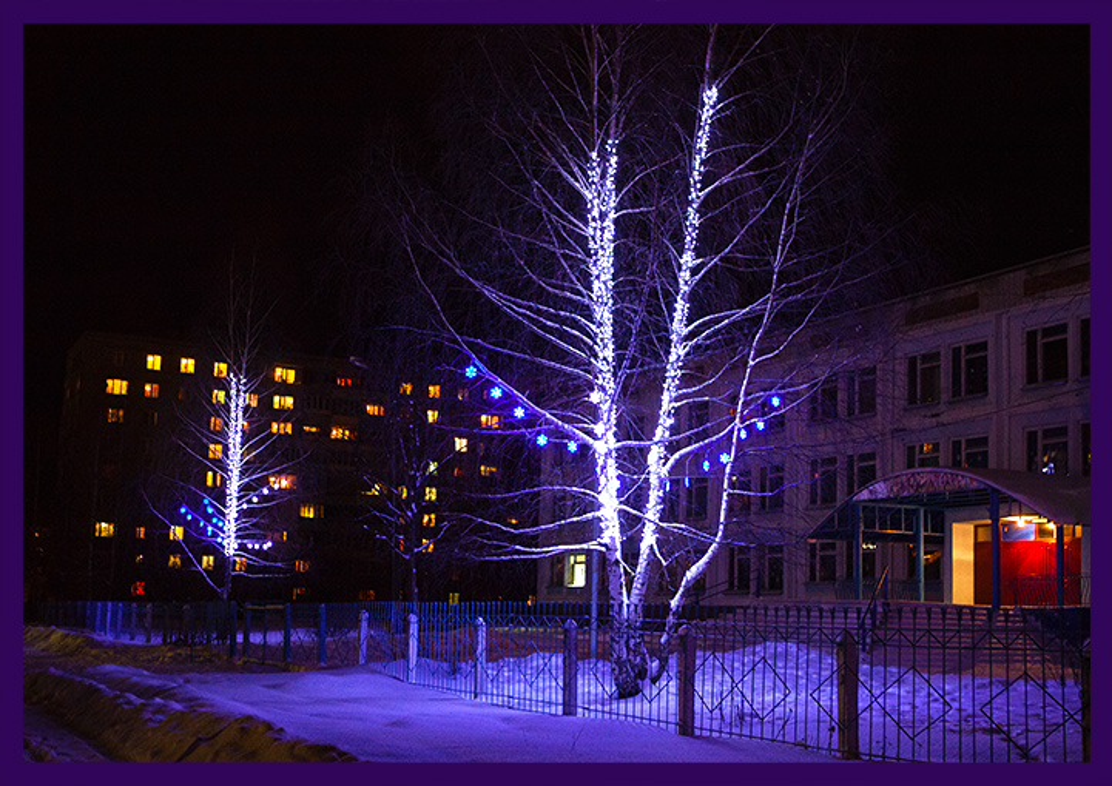 Гирлянды на деревьях во Владимирской области