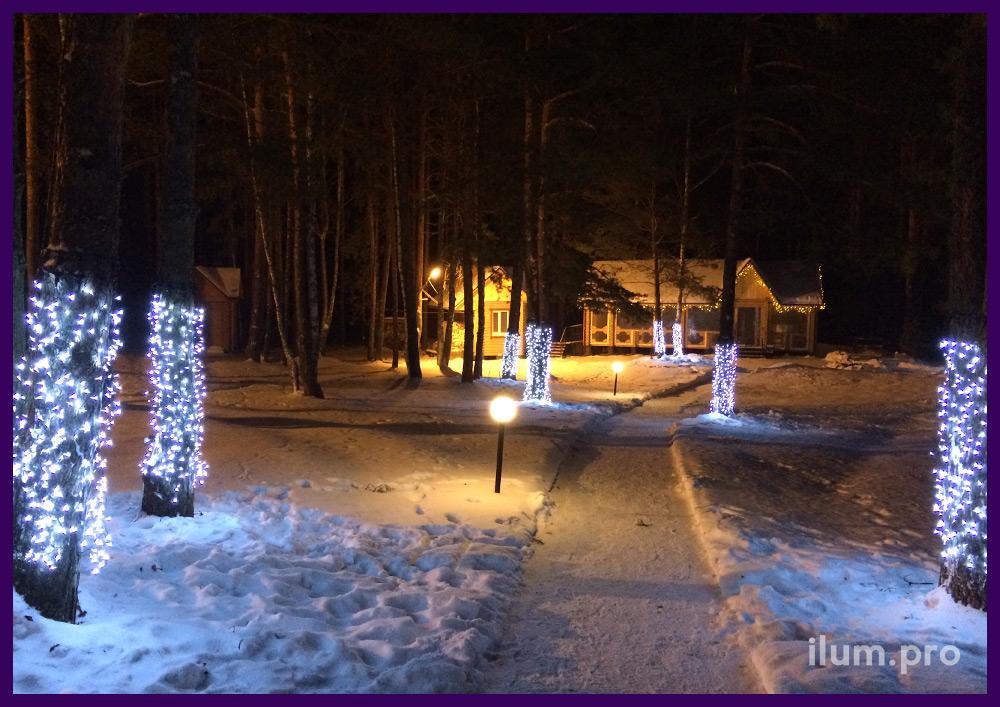 Новогодняя подсветка стволов деревьев гирляндами