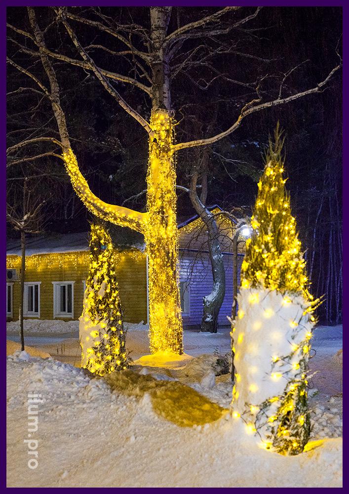 Парковая подсветка деревьев на Новый год