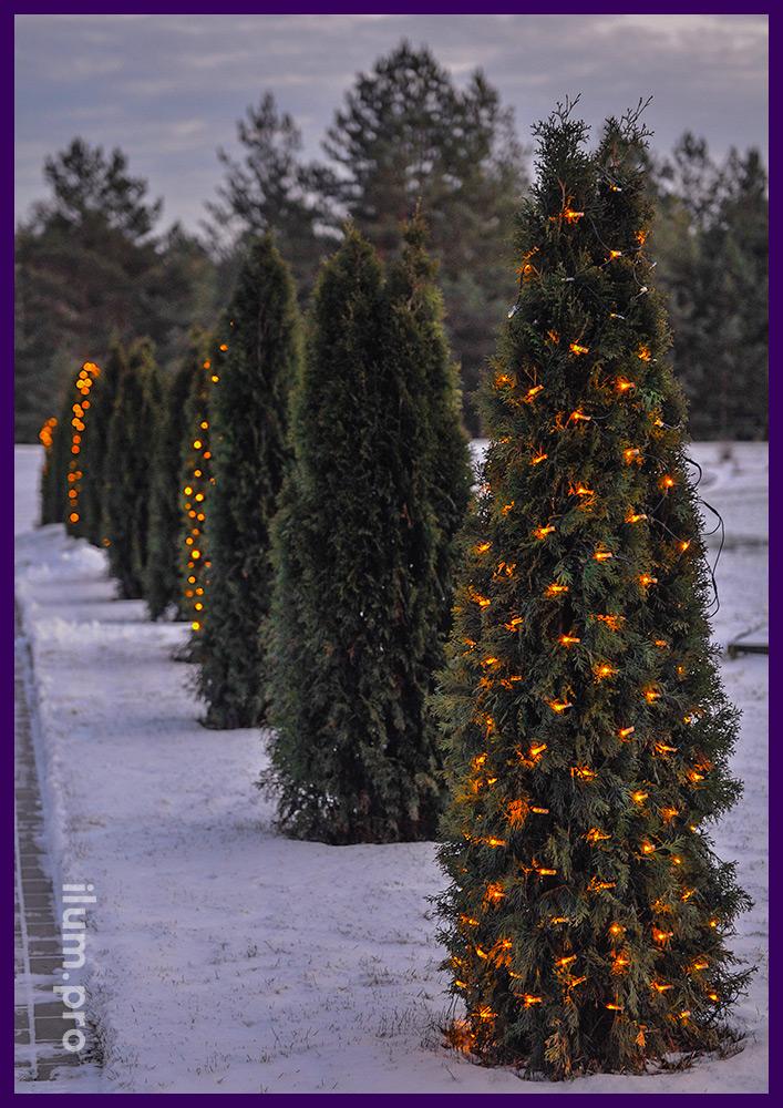 """Новогодняя подсветка туй светодиодными гирляндами """"сеть"""""""
