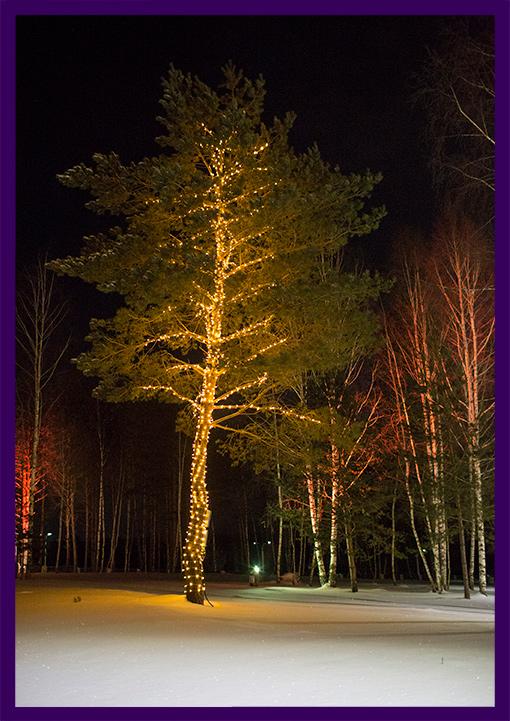 Новогодние гирлянды на деревьях в лесу