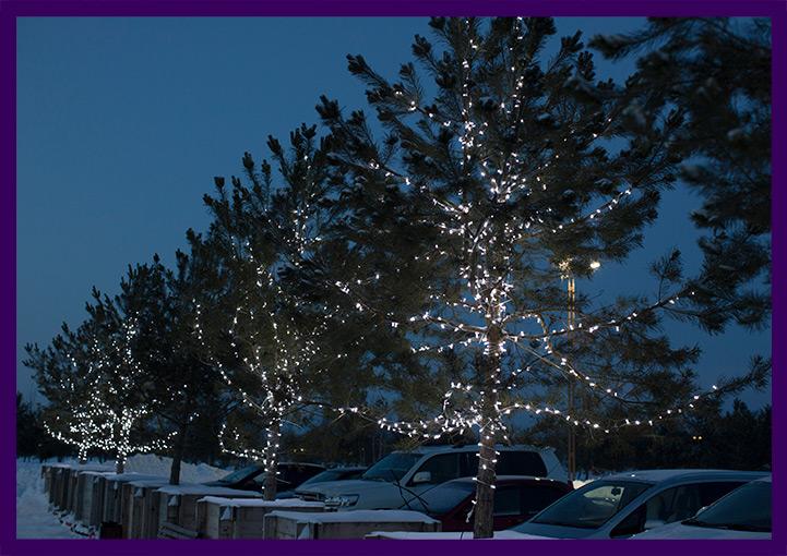 Новогодние гирлянды на деревьях белого цвета