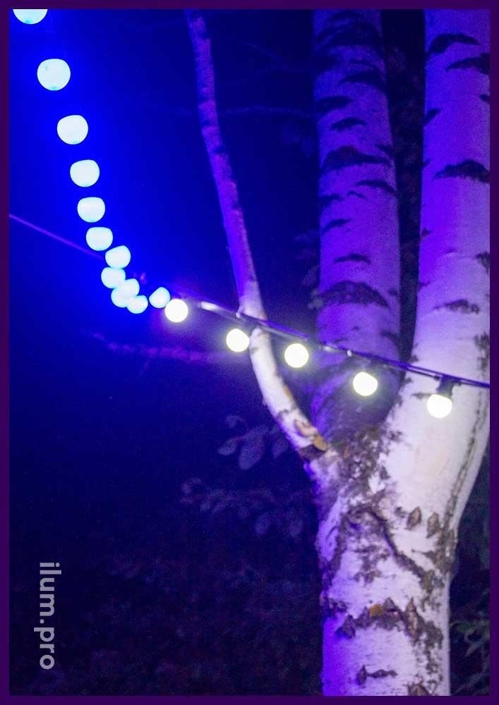 Лампочки светодиодные - гирлянда белтлайт на берёзе в парке