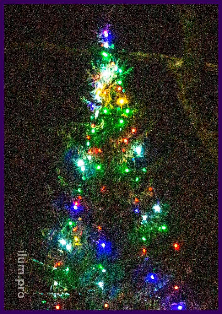 Подсветка живой ели во дворе дома разноцветной иллюминацией с пластиковыми лампочками