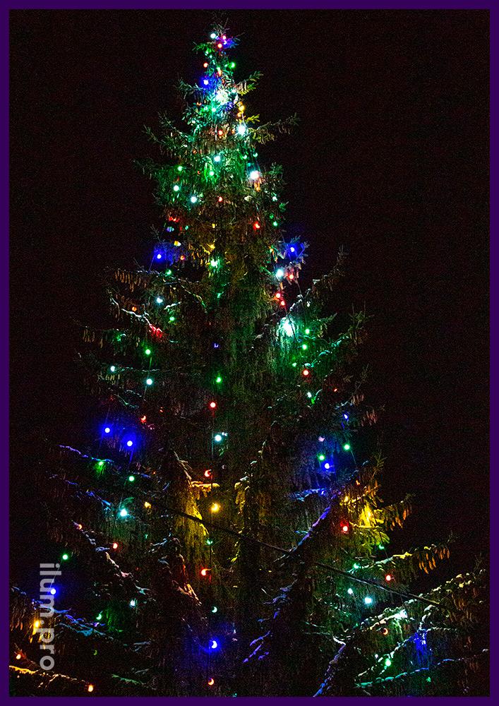 Линии яркого разноцветного светодиодного белтлайта на живой ёлке рядом с домом на Новый год