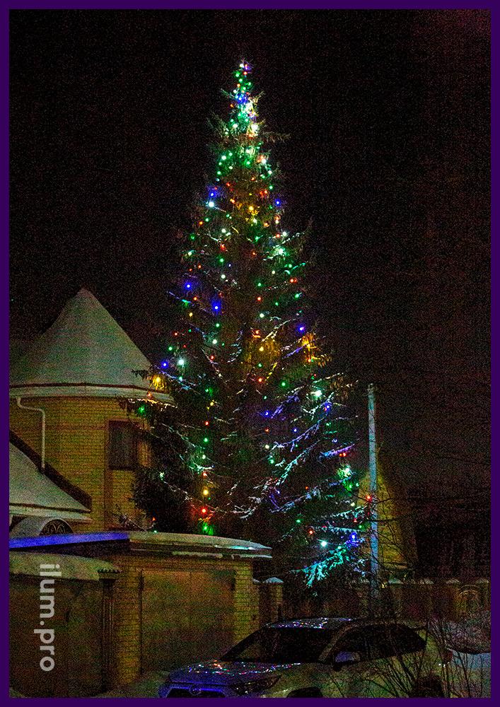 Подсветка живой ёлки в Гусе разноцветными гирляндами с лампочками белтлайт IP65