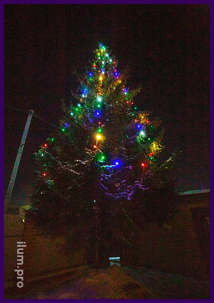 Разноцветный белтлайт на высокой уличной ели в Гусь-Хрустальном на новогодние праздники