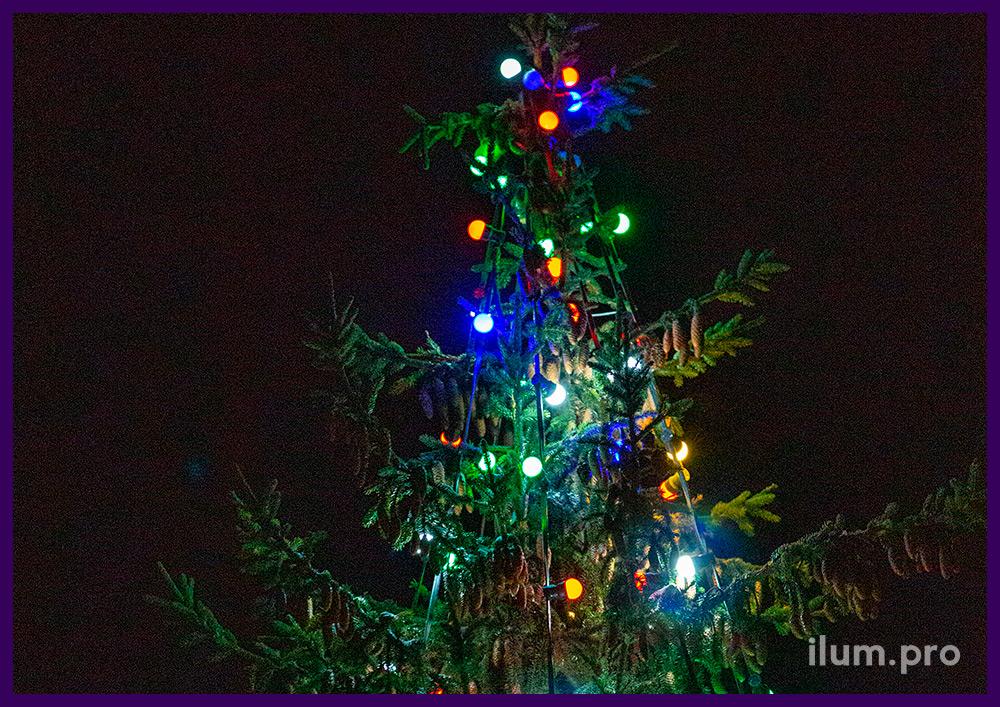 Украшение живой ели во дворе частного дома светодиодным белтлайтом с разноцветными лампочками