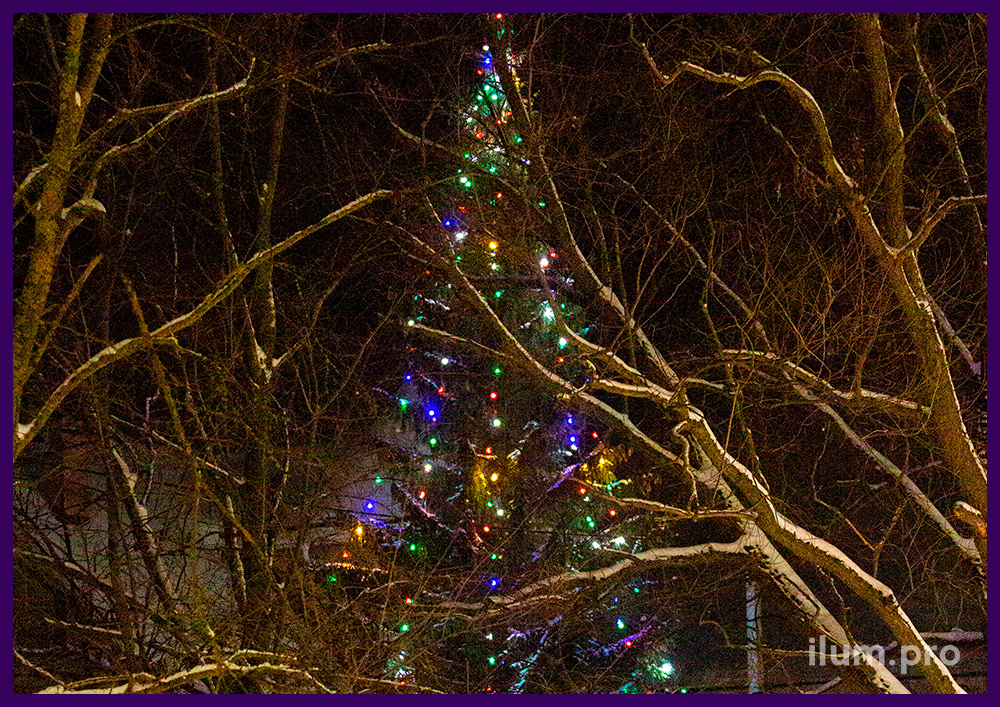 Новогоднее украшение ёлки во дворе частного дома во Владимирской области уличными гирляндами