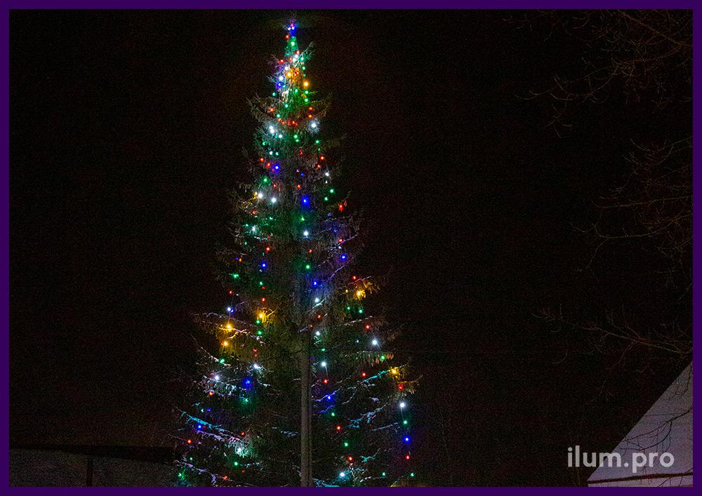 Светодиодный белтлайт разных цветов на живой ели в Гусь-Хрустальном на Новый год